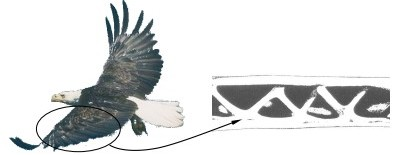 History_Geschichte_Picture_bird_wing