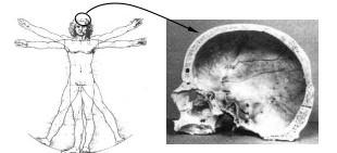 History_Geschichte_Picture_human skull